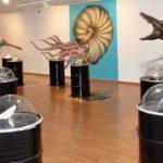 Exposición: Fósiles, el origen del carbón.