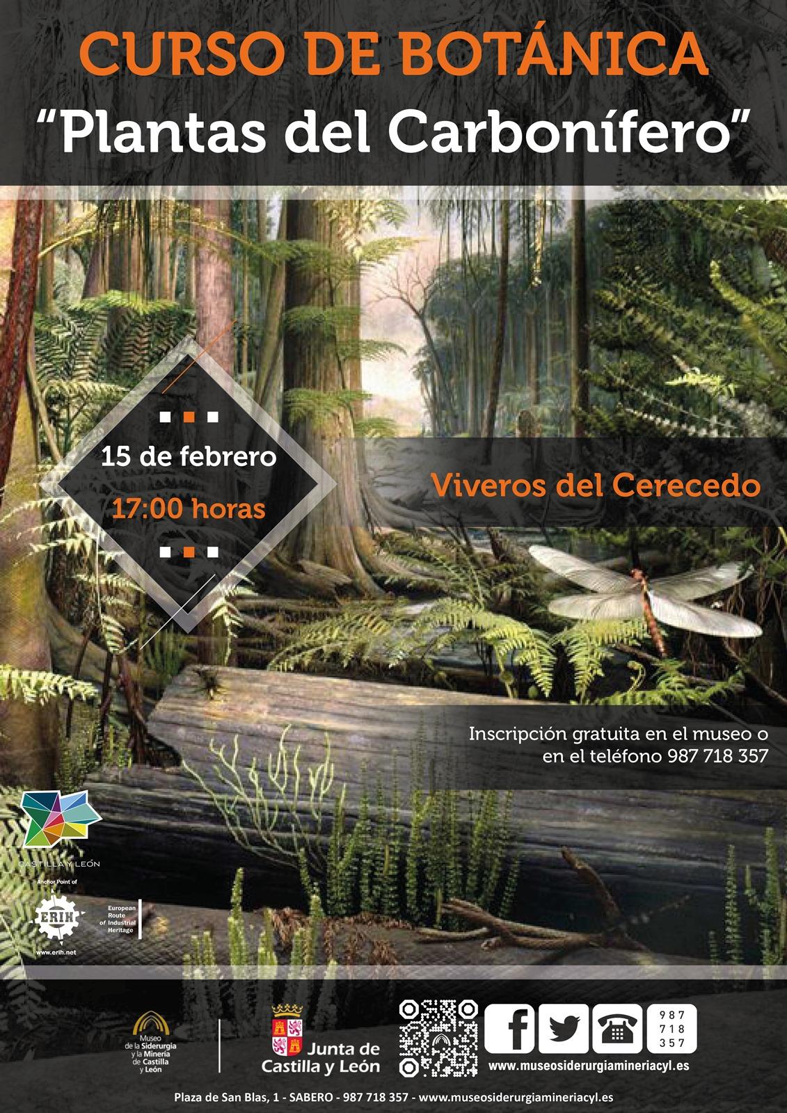 """MSM FORMACIÓN: Segunda sesión del curso de Botánica: """"Plantas del Carbonífero"""""""
